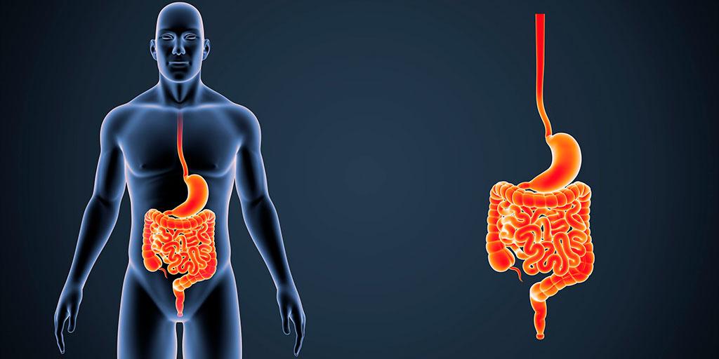 La nostra salute passa per l'intestino