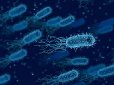 Il microbiota: un organo virtuale