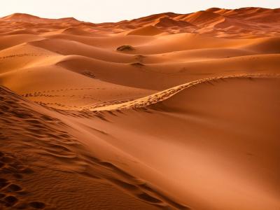 Anche dal deserto della pandemia si può rifiorire